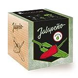Feel Green Ecocube Piment Jalapeño (Force du Chili 4), Idée Cadeau (100% Ecologique), Grow-Your-Own/Kit...