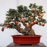 20pcs / sac grenade Mini Bonsai Graines SeedsAndPlants Plante Délicieux Fruit Graine grande et douce pour...