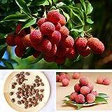SKAISK Graines de Litchi, 10pcs Pack graines de Litchi Plantes graines Subtropical saisonniers délicieux...