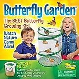 Insectlore de Buki - Jeux Educatifs - Kit d' elevage de papillons